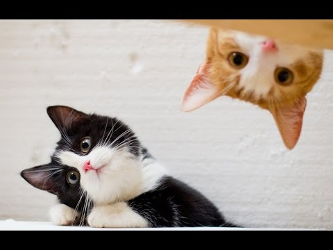 funny animals - FUNNY VIDEOS: Funny Cats - Funny Cat Videos - Funny Animals - Funny Fails - Cats Chasing Shadows Please Subscribe and share on Facebook -- FUNNY VIDEOS 2014 Funny Cats 2014 Funny Cat Videos...