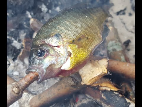 🐟Survival Fishing: How To CLEAN & COOK OVER OPEN FLAME🐟