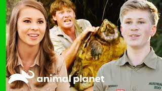 Incredible Animal Moments From Season 1 of Crikey! It's The Irwins (Compilation) by Animal Planet