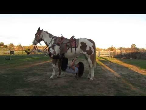 15 Different Ways to Ride Your Horse!