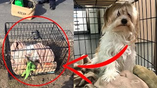 Poor Dog Is Ditched On The Side Of The Road In A Crate With All Of His Toys by Did You Know Animals?
