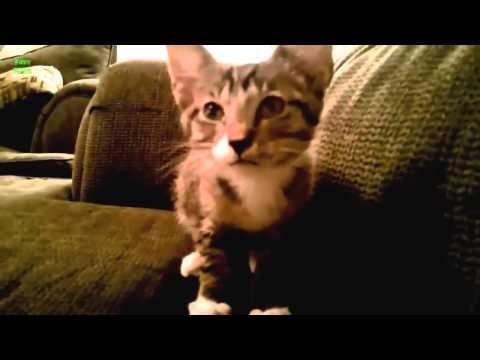 Te gustan los gatos? no dejes de ver este video!
