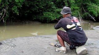 Download Video Dapat Ikan Mahal Di Anak Sungai MP3 3GP MP4