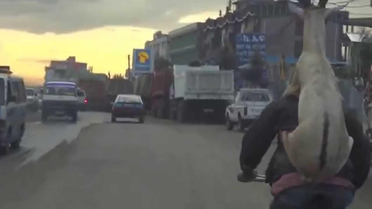 Onokad se koza vozi na leđima