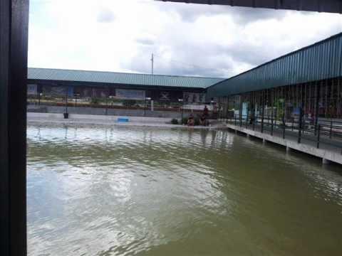Natural exotic fish fishing pond(RAWANG POND)