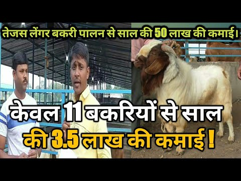 केवल 11 बकरियों से 3.5 लाख की कमाई !। goat farming information in hindi।motivational video (видео)
