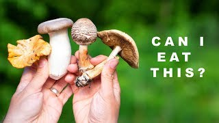 Video How Difficult is it to Find Food in the Forest? Delicious or Deadly? MP3, 3GP, MP4, WEBM, AVI, FLV Juni 2019