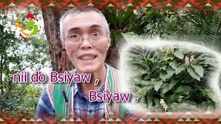 從認識植物 輕鬆學習太魯閣語