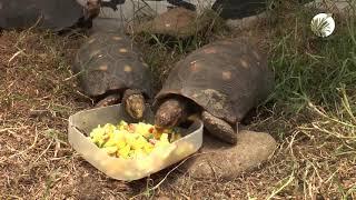 Cápsula Informativa Protección Fauna Silvestre 2018