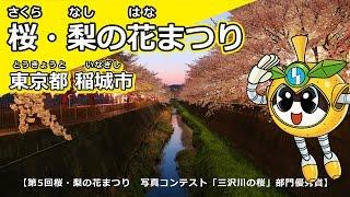 桜・梨の花まつり【東京都稲城市】