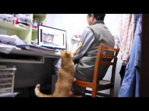 會叫主人吃飯的貓咪!好可愛!