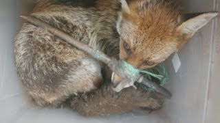 Shocking pictures: RSPCA highlights abuse of animals