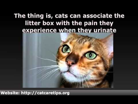 Cat Urinary Tract Infection