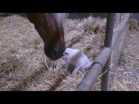 Preslatko: Maca i konj se maze