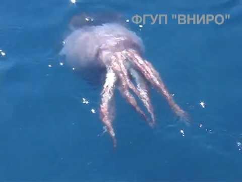 有人跟我說有超巨大的烏賊會跟大鯨魚打架我都不相信,但現在我相信了…