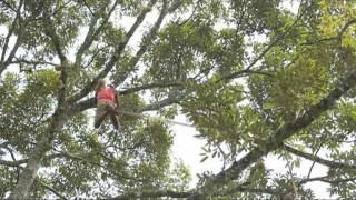Video Di balik rasa Durian MP3, 3GP, MP4, WEBM, AVI, FLV Oktober 2018