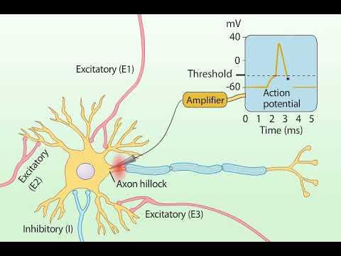 Summation of Postsynaptic Potentials