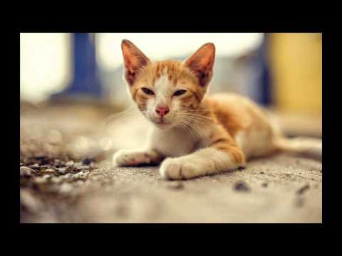 Cat Health Secrets – Healthy Living Resource; Tricks to Teach Your Cat, Cat Training Tips