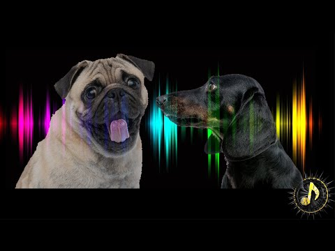 Angry Dogs Barking Sound Effect | Pet Sound Effects