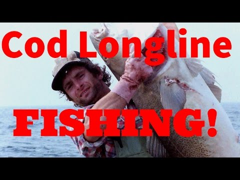 Cod longline fishing with Georgie B