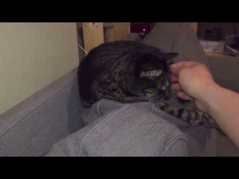 Waking a Cat up with an Airhorn