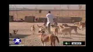 پناهگاه حیوانات پردیس