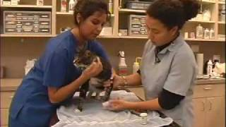 How to Trim Nails on Cat - LazyPaw Animal Hospitals