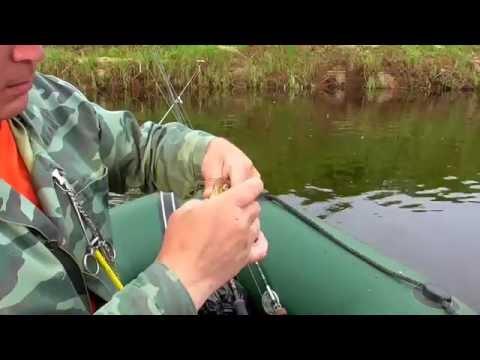 ловля плотвы в проводку с лодки