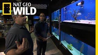 fish tanks Fish Tank Kings - Avoiding A Bloodbath
