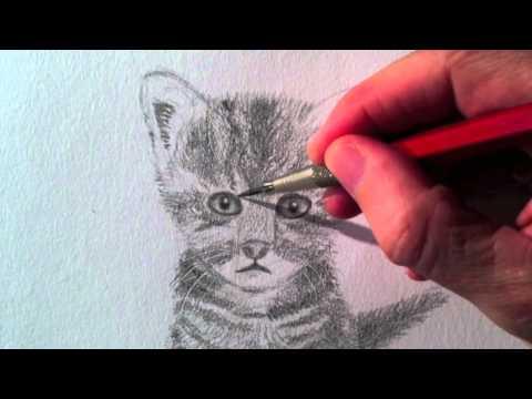 Como dibujar un gato realista - Dibujando un gatito a lápiz