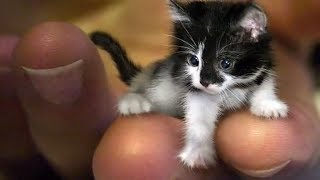 WORLD'S smallest ANIMALS! by Epic Wildlife
