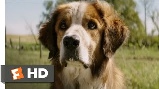 Nonton A Dog S Purpose  2017    I Found You  Scene  8 10    Movieclips Film Subtitle Indonesia Streaming Movie Download