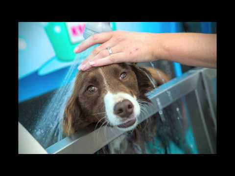 Happy dogs at the K9000 Dog Wash