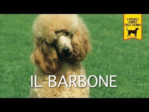 il barbone - trailer documentario