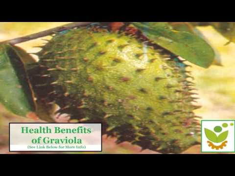 The Truth about Soursop (Graviola) for Anti-Cancer Cure