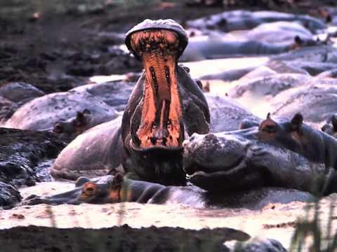 El Serengeti en peligro