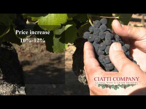 Central Coast: Feb 2012 Ciatti Grape Report
