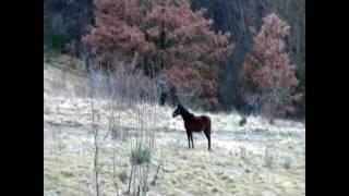 Casentino Italy  city pictures gallery : Filmato Raro di lupi e un cavallo nel parco nazionale casentinese.