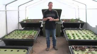 Grow your own Organic Food with Aquaponics