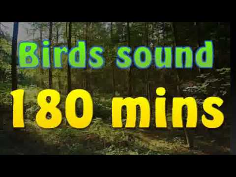 birds - I've recorded this sound in my house in the village in Poland. I also made some modification with program