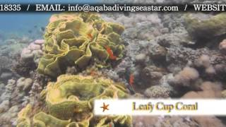 re aqaba sea star dive club