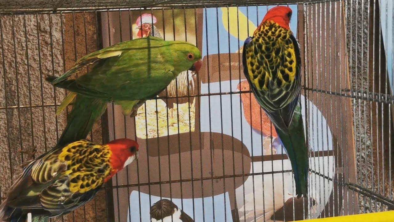 Πελοποννησιακή έκθεση πτηνών συντροφιάς στο Άργος