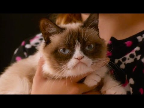 First Look At Grumpy Cat's Worst Christmas Ever