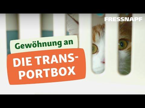 Katze an die Transportbox gewöhnen I FRESSNAPF