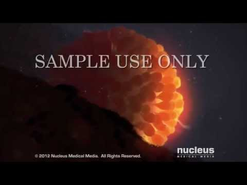 conception - View more AMAZING medical animations at http://www.nucleuslibrary.com To download FREE medical animations of pregnancy and birth, visit http://www.prenateper...