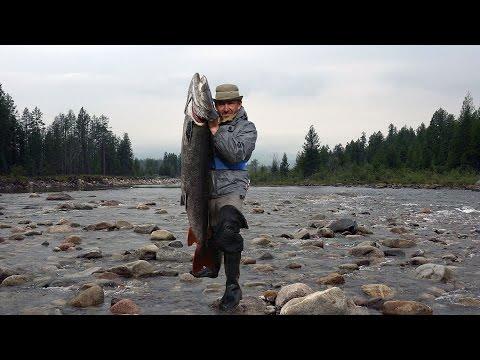 рыбалка на реке чикой забайкальского края