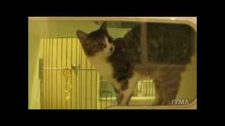 Hurricane Sandy Pet Emergency Preparedness Tips - New Jersey Veterinarian (Wayne, NJ)