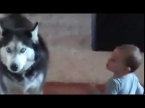 il-cane-che-imita-il-bimbo-111