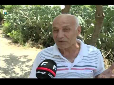 لبنان الحرائق السياسية وصلت الى المساحات الخضراء