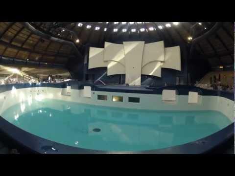 Dolfijnen terug in vernieuwde bassin